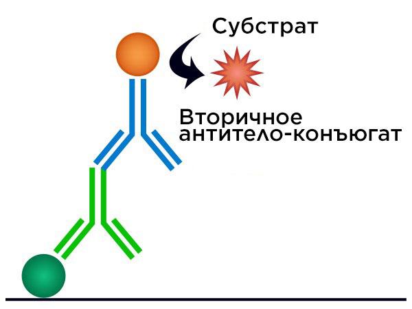 Схема ИФА