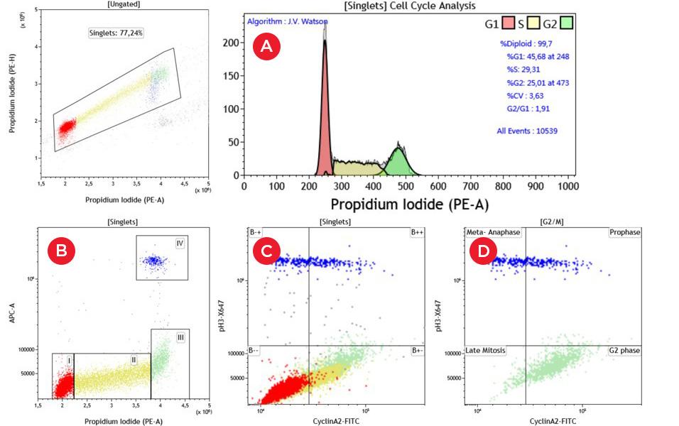 Данные многопараметрического анализа клеточного цикла