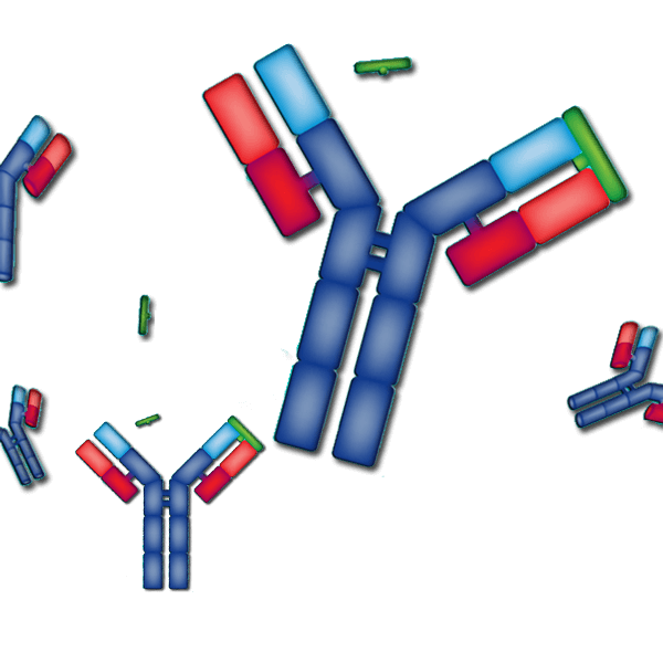 Antibody Engineering Graphic