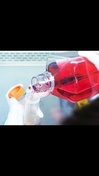 Cell culture bottle poured into tube