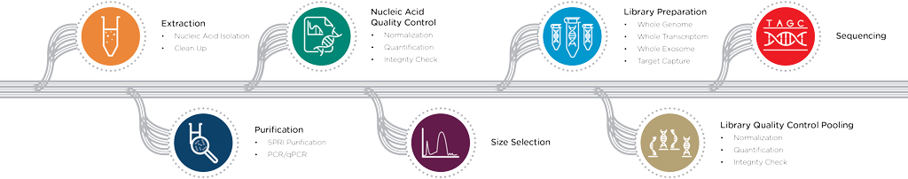 Illustrazione del flusso di lavoro per il sequenziamento di nuova generazione (NGS)