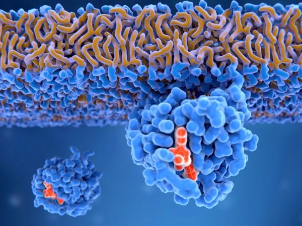 cellular communication and transduction